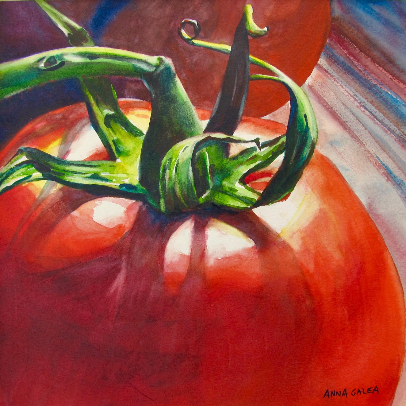 Tomato', 2012, Watercolour, 30x30cm, Anna Galea